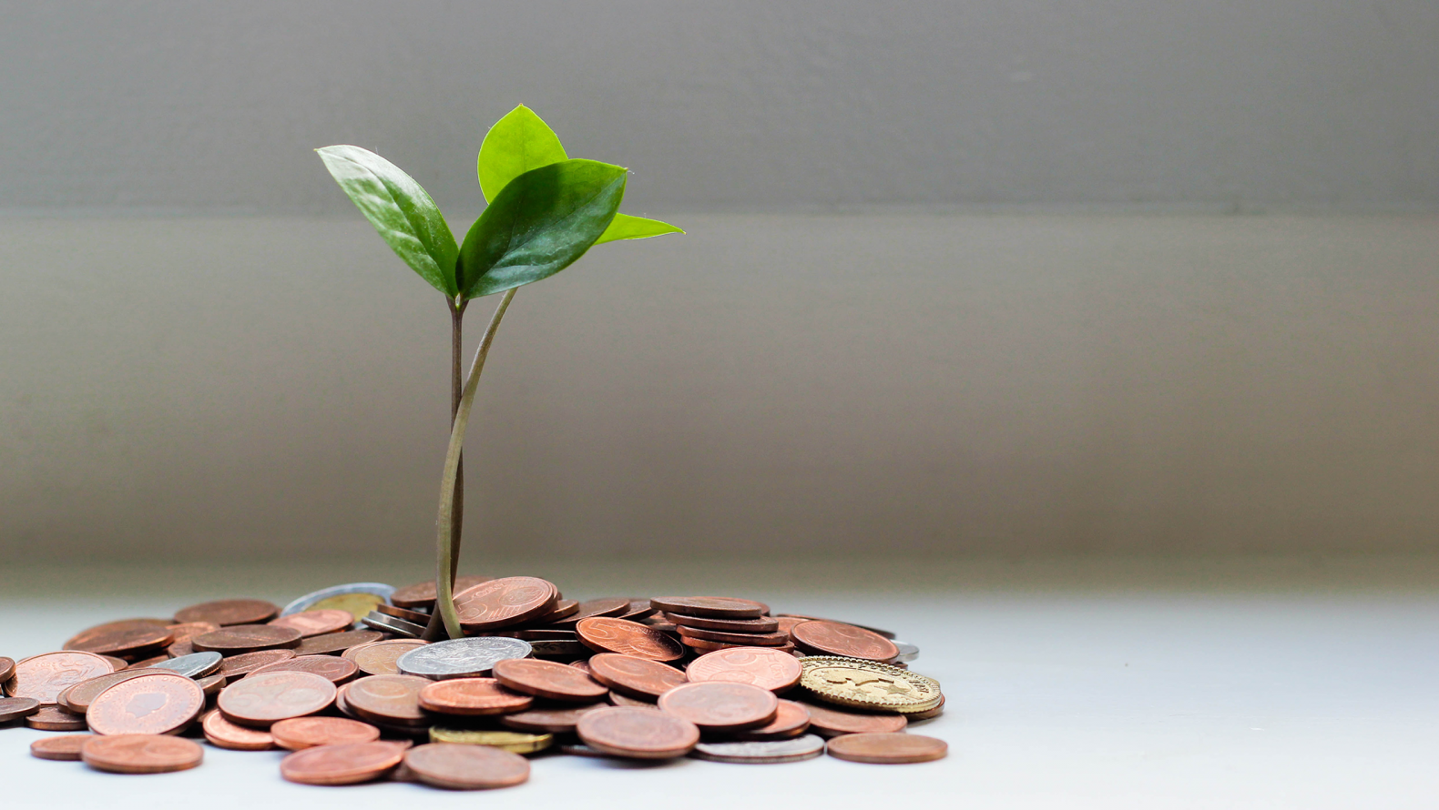 A plant growing in money. Photo: Micheile Henderson for Unsplash.